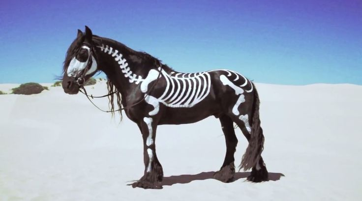 Halloween or Dios de los Muertos horse. Great paint job.