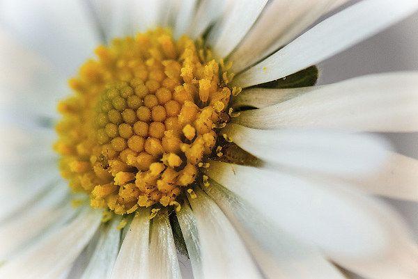 Sun Seeker - Dinah Beaton Photography