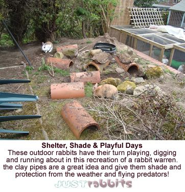 These rabbits are enjoying their turn at running about and playing outside. The half clay pipes are a superb way of giving the bunnies shade and protection too!