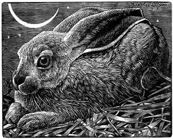 Nicholas Wilson - Cosmic Rabbit