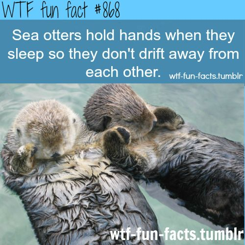 Cutest fact that ive seen so far :) WTF-fun-facts : funny & weird facts ( Hermione whose patronus is an otter also holds hands with Ron when they sleep). :)