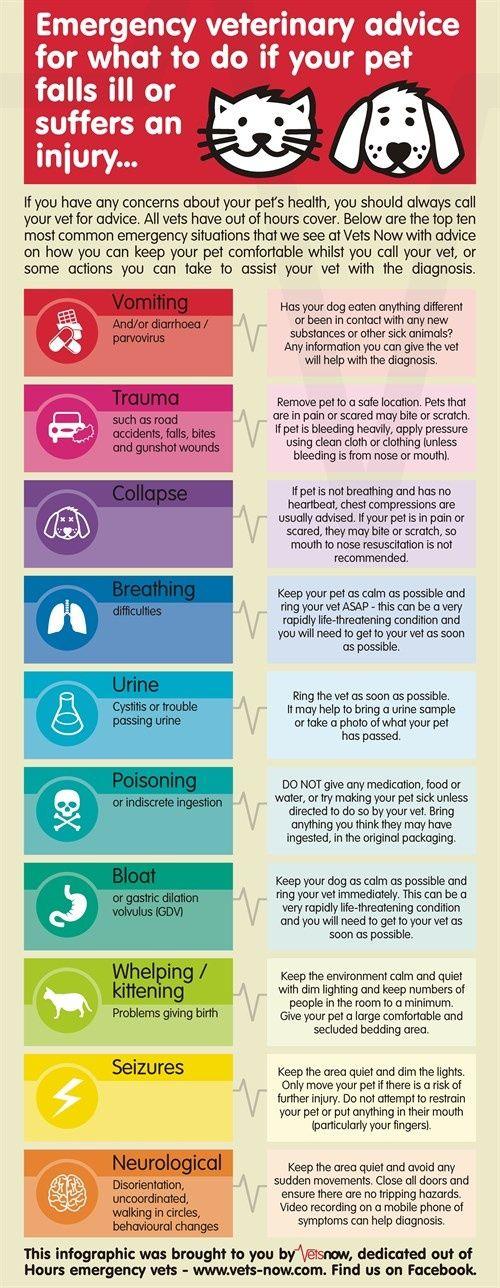 Emergency Veterinary Advice