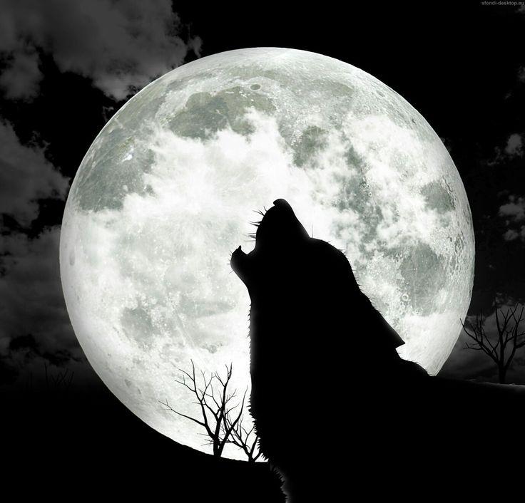 Luna piena di gennaio. .luna del lupo