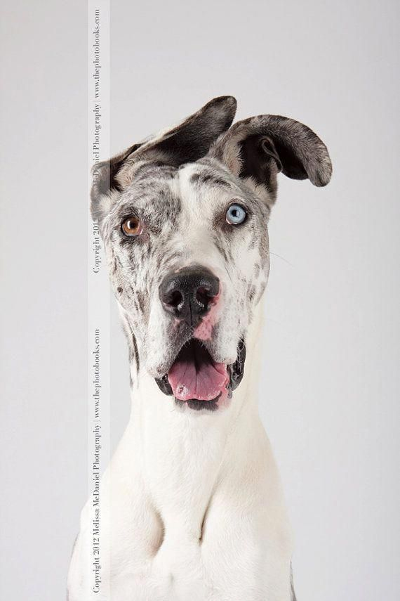 Exceptional Great Dane Info Is Offered On Our Internet Site