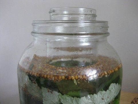 Homemade Bubbies Pickles, (c) The Herbangardener