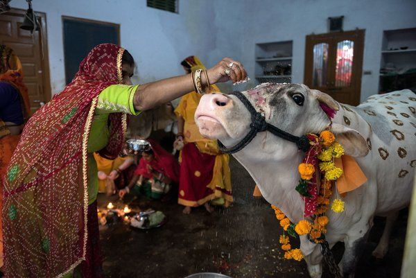 Mob Attack, Fueled by Rumors of Cow Slaughter, Has Political Overtones in India - The New York Times