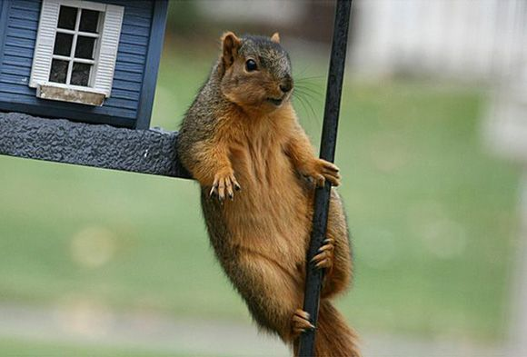 40 Endearing Pictures of Squirrels