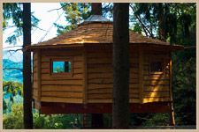 Tree cabins, just outside Barcelona