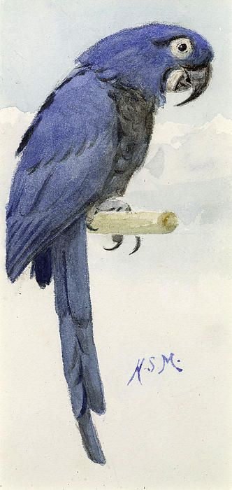 Hyacinth Macaw by Henry Stacey Marks - Hyacinth Macaw Painting - Hyacinth Macaw Fine Art Prints and Posters for Sale