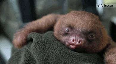 """I should make a new category called """"Adorable"""" for this one! I never knew a sloth could be so darn cute. found on viralnova.com"""