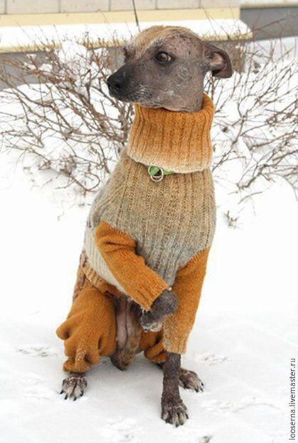 Одежда для собак, ручной работы. Комбинезон для собаки. Julia. Интернет-магазин Ярмарка Мастеров. Свитер для собак, медовый цвет