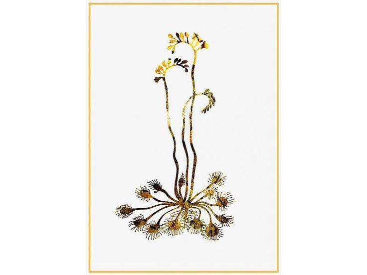 Sparkling Paper poster kangaroo plant, Deze plant heet de kangoeroepoot en als je beter kijkt, begrijp je wel waarom. Een rustgevend plaatje in natuurlijke tinten.