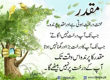 Quotations about nature