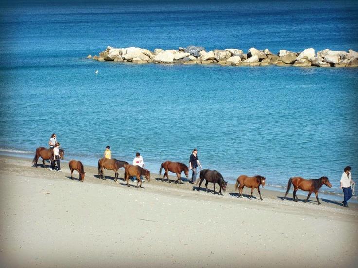 Skyros Island-Greece #skyrian #ponies