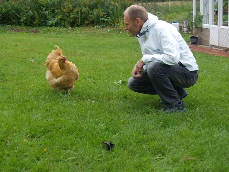 RudusPiha Facebook seurantakohde 2014. Tiinan ja Petrin kanat kyselivät innokkaasti, minkälainen piha heille on tulossa. http://www.rudus.fi/pihakivet