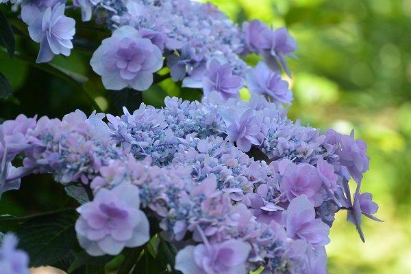 伊豆四季の花公園