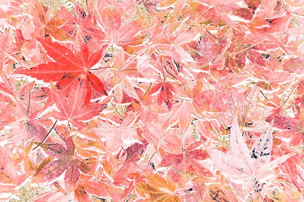 #PASTEL #IMPRESSIONS OF #AUTUMN by #Kaye #Menner #Photography Quality Prints Cards at: http://kaye-menner.artistwebsites.com/featured/pastel-impressions-of-autumn-by-kaye-menner-kaye-menner.html