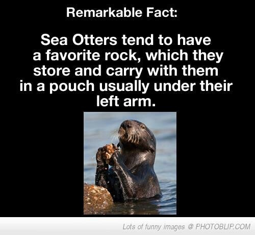 Sea Otter  ~~ I must have been a otter in my other life, I always have a rock with me. LOL