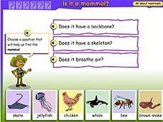 Animal search: is it a mammal? (1-2). Students analyse the physical features of a group of animals and use that information to classify the animals as fish, amphibian, reptile or mammal.