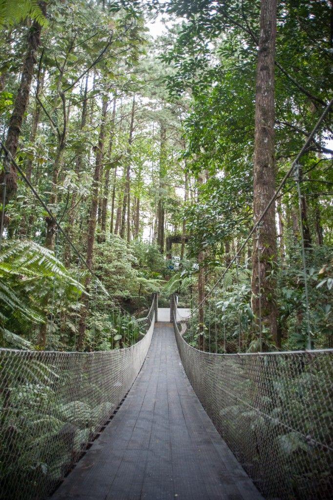 Que voir au Costa Rica. Que faire de sympa par région (Detour Local) -> Pont suspendu dans le parc de l'Observatory Lodge tout près d'Arenal www.detourlocal.com/que-voir-au-costa-rica-itineraire-region/