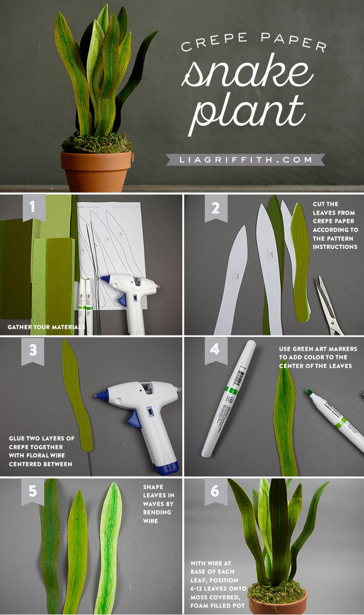 Break into the world of easy DIY with our beautiful crepe paper snake plant…