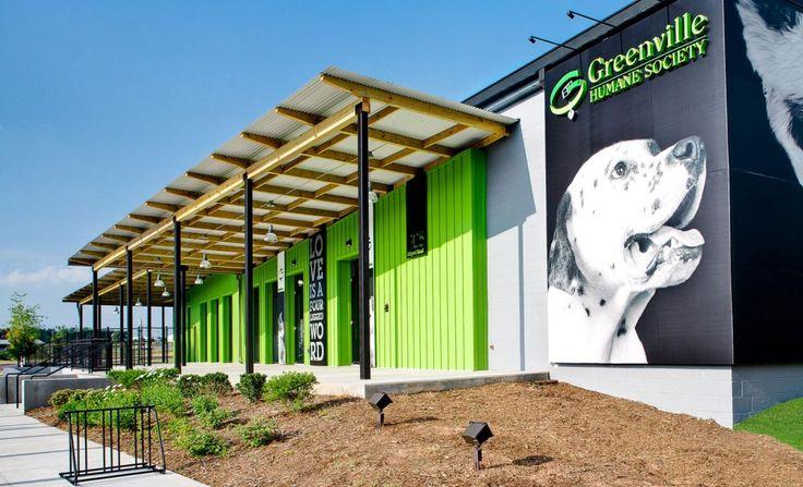 Greenville Humane Society Dog Adoption