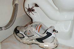 Tuer les araignées ? Tout de même pas. Nous ne sommes pas des sauvages, même si nous avons peur. Voici 9 astuces naturelles afin de les faire fuir de la maison.  Découvrez l'astuce ici : http://www.comment-economiser.fr/araignees-dehors-maison.html?utm_content=bufferddb56&utm_medium=social&utm_source=pinterest.com&utm_campaign=buffer