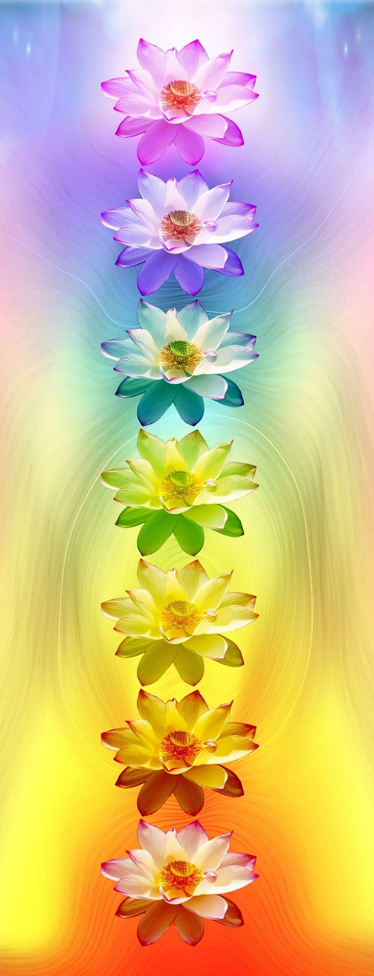 chakra-flowers-e1338904250765.jpg (1297×3386)