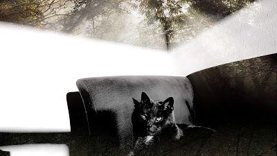 Matkojeni blogi: Täydellinen sfinksi: harmaja kissa