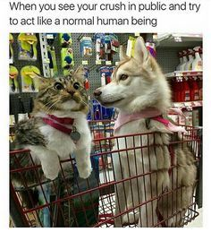 48 Funny Cat Memes That Will Keep You Laughing