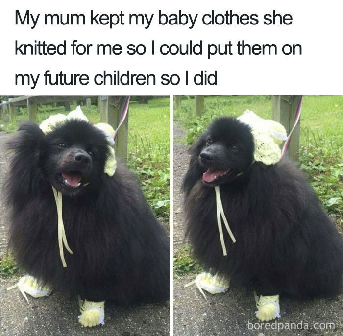 24 Funny Memes That Will Only Be Funny For People Who Prefer Pets Over Kids Funny Kid Memes Funny Pranks For Kids Funny Comics For Kids