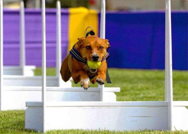 Flaybol - egy izgalmas játék, aktív kutyáknak