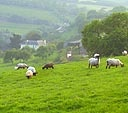 The sheep are your neighbours at the Nest holiday cottage South Devon