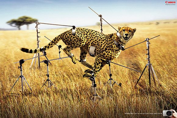 Canon: Steady Shot: I Observed That The Campaigns, Creative Noticed, Cheetahs,  Chetah, Funny Commercial, Canon Cameras,  Acinonyx Jubatus, Digital Cameras, Prints Ads