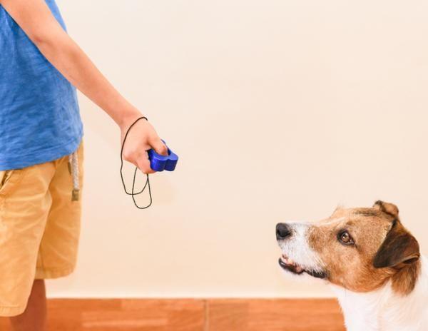 Cómo Adiestrar A Un Perro Cachorros Y Adultos Perros Perros Cachorros Adiestrar
