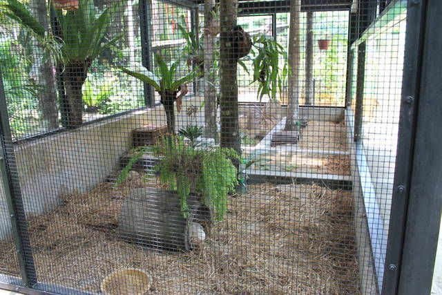 hedgehog enclosure - great for bunnies too!