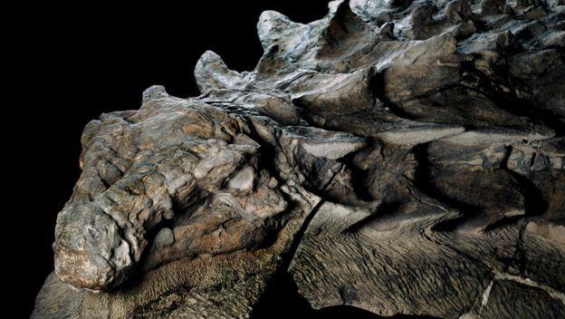 Hallan dinosaurio momificado que parece un dragón de Juego de Tronos. Foto: National Geographic
