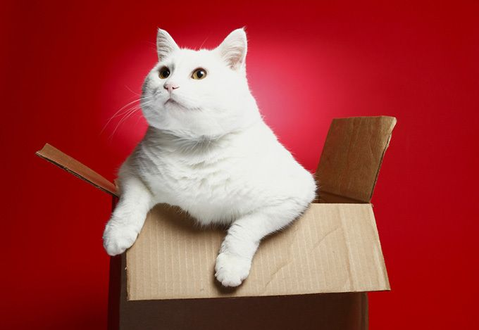 Почему кошки обожают коробки? | Поведение | Кто я | Psychologies