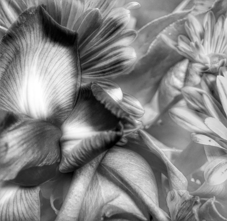 Another view of a time when a bouquet of flowers met my photo filters.