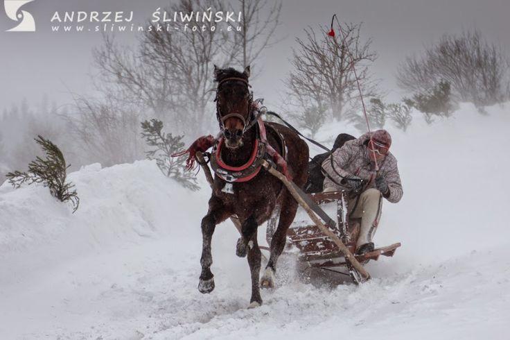 through geographer's eyes: Kumoterki - traditional sleigh race