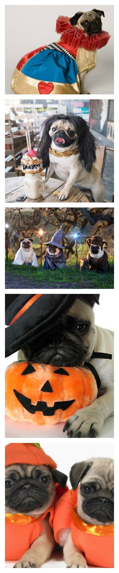 best 25 pug halloween costumes ideas on pinterest pug costume pugs and pug - Pugs Halloween