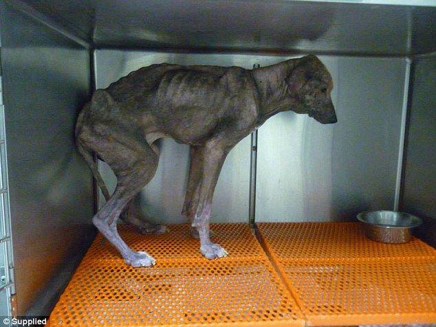 """""""O GRITO DO BICHO"""": A atual e triste situação dos cães na Grécia"""