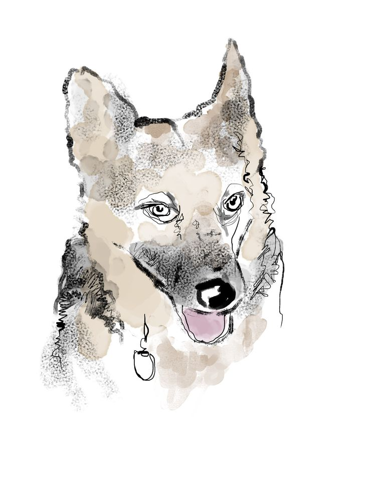 """""""All Dogs get into heaven. You loved that line"""" from """"Hounds Of Wonder: A Life In Rescue Dogs"""" by B.D. Love. Illustration by Walt Taylor."""
