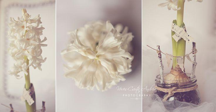white, vintage, csutafoto, flower, spring