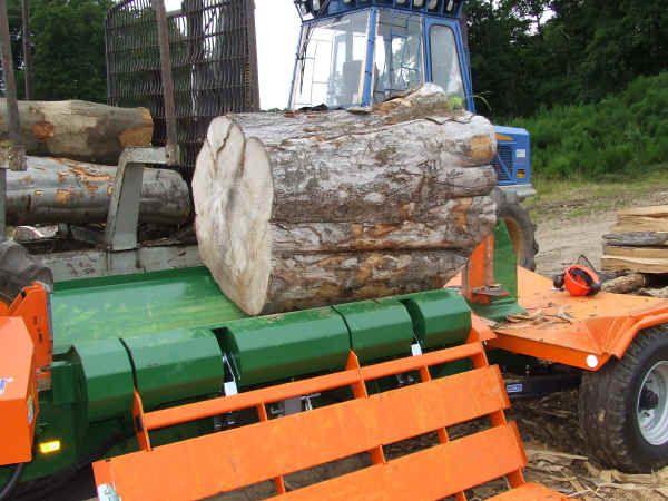 Large Beech log ready for splitting on the Posch 30t horizontal splitter