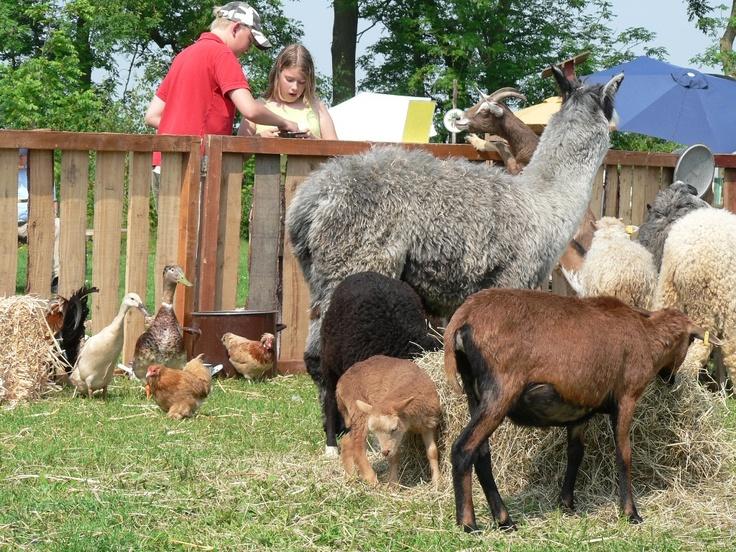 @ the animal farm
