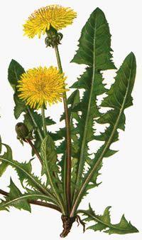 9. alleen weed kan met zijn plantenkennis kan jassemine redden. Met de juiste planten kan hij haar redden. Zo niet hang jassemine's leven aan een zijden draadje.