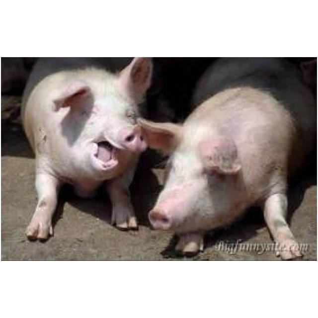 Social Pigs, who love a good tail, I mean tale.