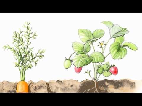 'Salada de flores': video