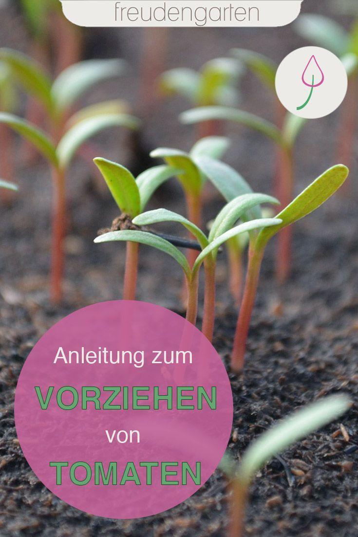 Tomaten Vorziehen Und Aussaen Selbstversorger Garten Tomaten Pflanzen Und Gartenprodukte